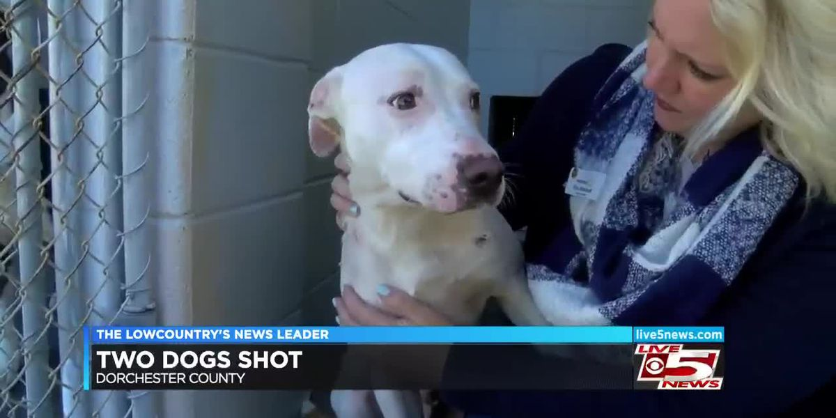 Dorchester Paws appealing for donations after treating two dogs for gunshot wounds