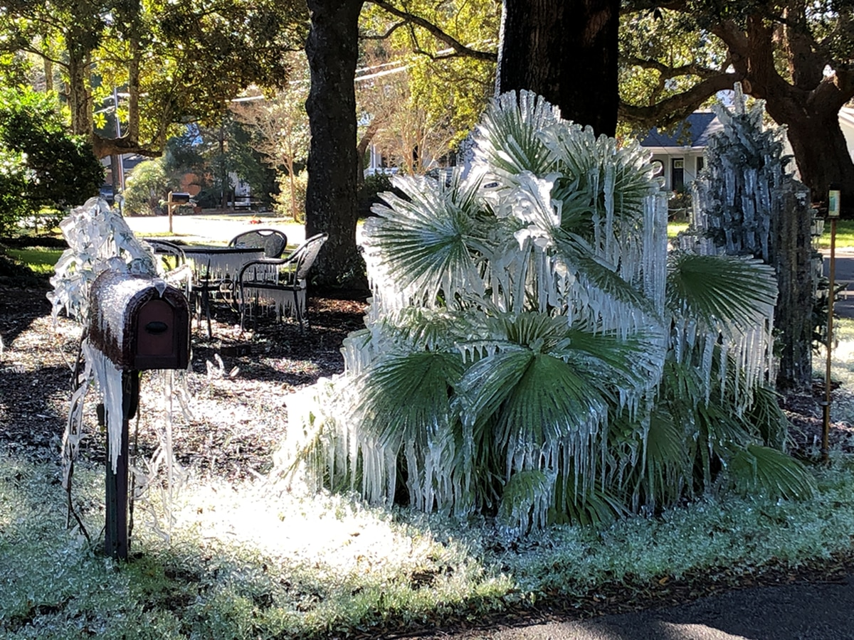 PHOTO: Sprinklers likely left on overnight gives Lowcountry resident an icy surprise