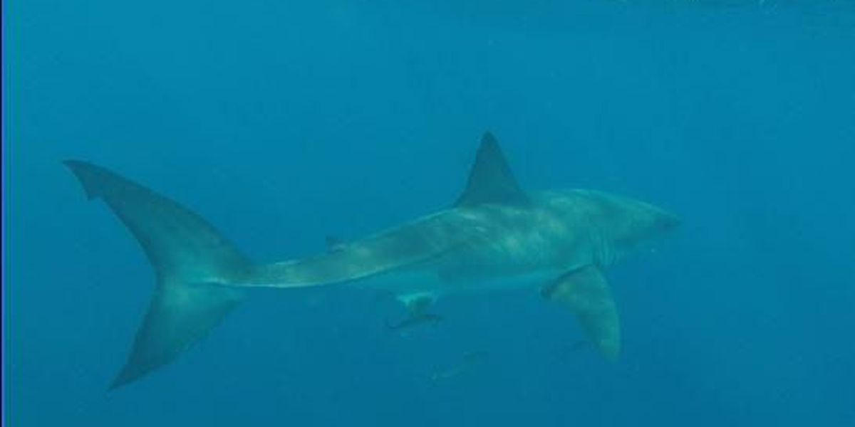 Great White Shark spotted off Charleston coastline during fishing trip