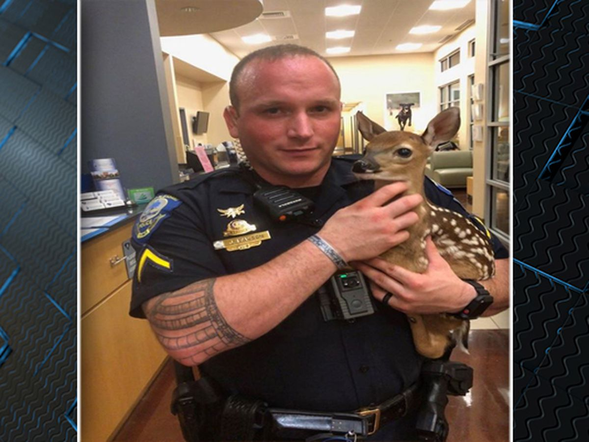 Mt. Pleasant officer rescues deer stuck in rocks at Waterfront Park