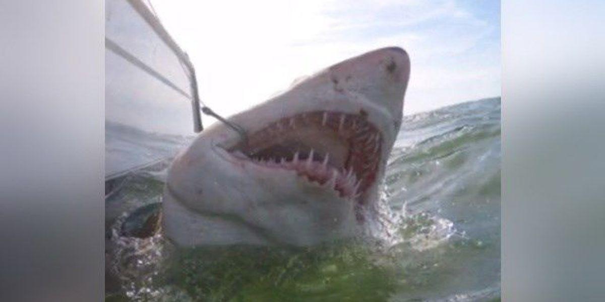 Father, sons catch three massive sand tiger sharks off SC coast