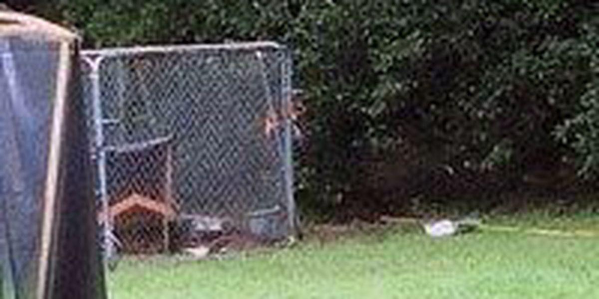 SC teen says lightning hit nearby fence, shocking him