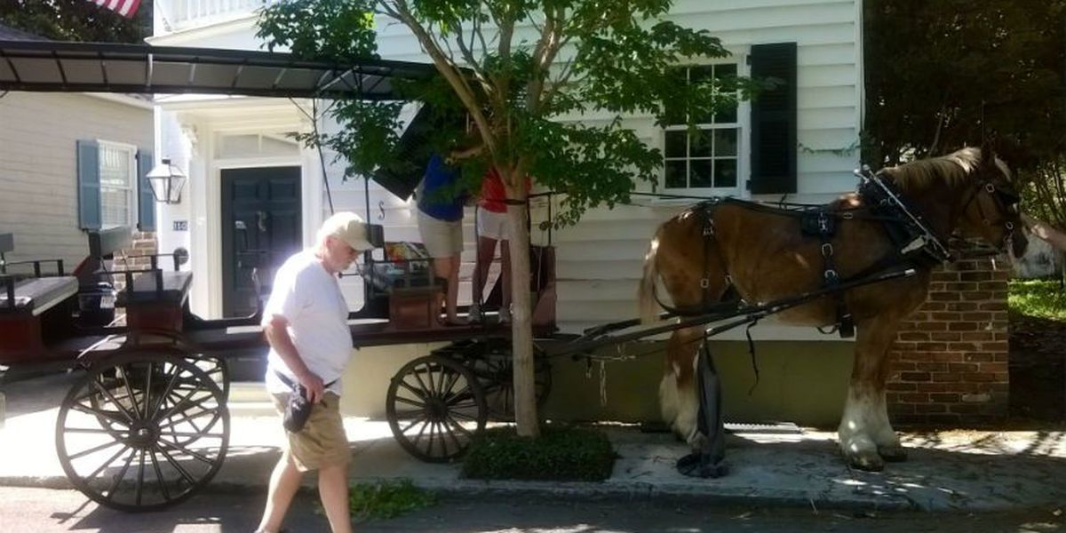 Carriage horse spooked, crashes carriage into downtown home