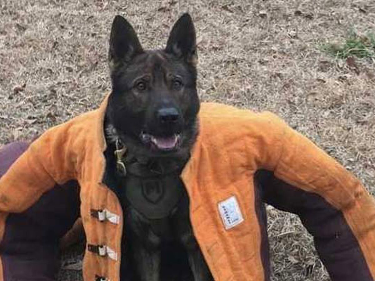 Suspect and K-9 die after 'ambush' shooting in S.C. parking lot, sheriff says
