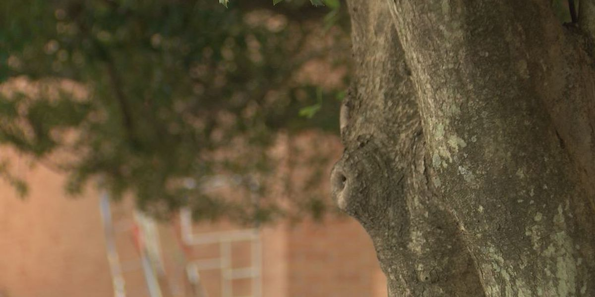 UNCC staff says figure hanging from noose on campus part of class project