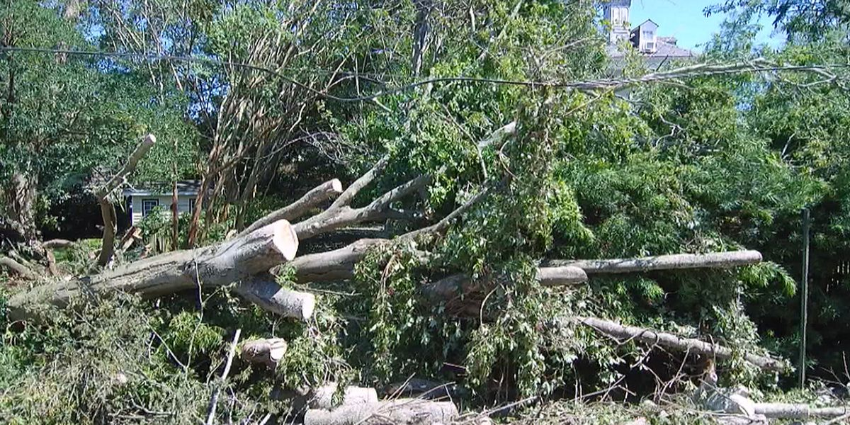 Lowcountry municipalities announce debris removal schedule