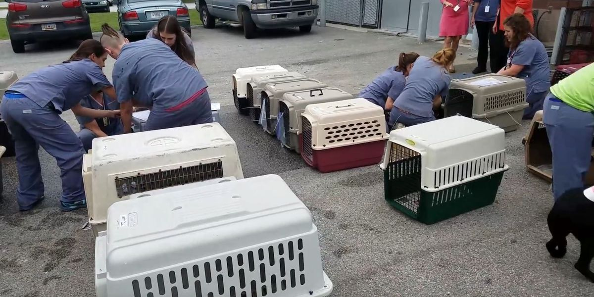 Animal shelters across S.C. join forces ahead of Hurricane Matthew