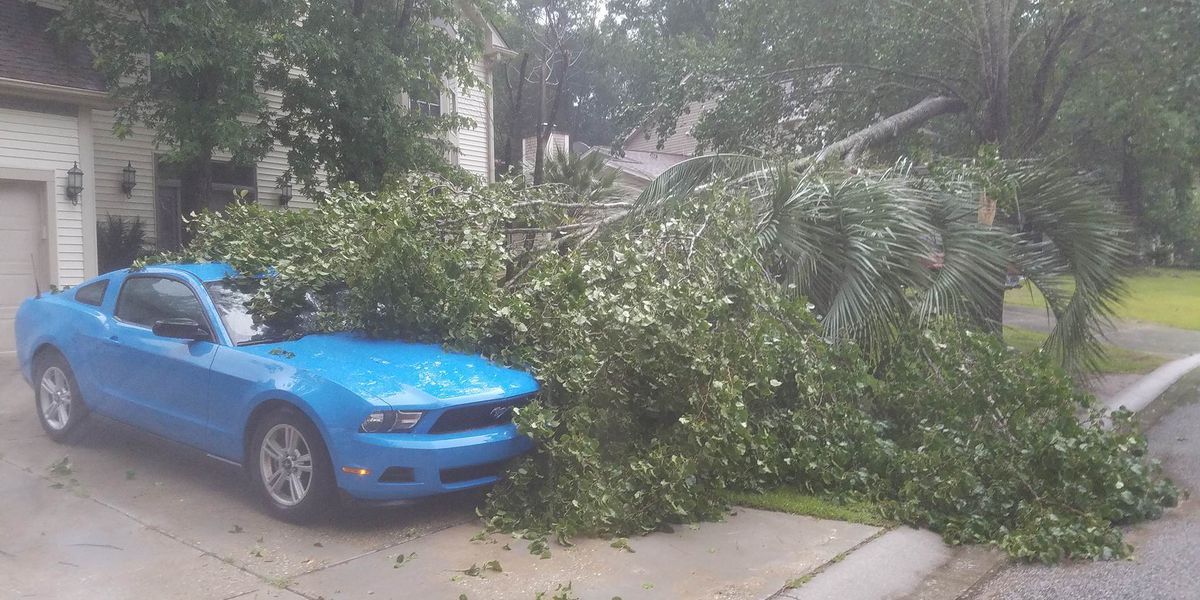 SLIDESHOW: Downed trees reported in the Lowcountry following severe storms