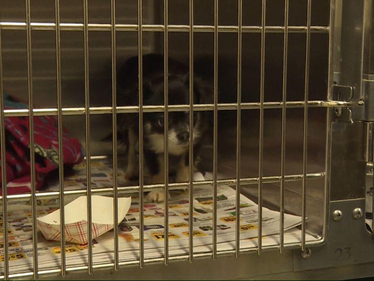 Charleston Animal Society assisting in care for animals seized from suspected puppy mill