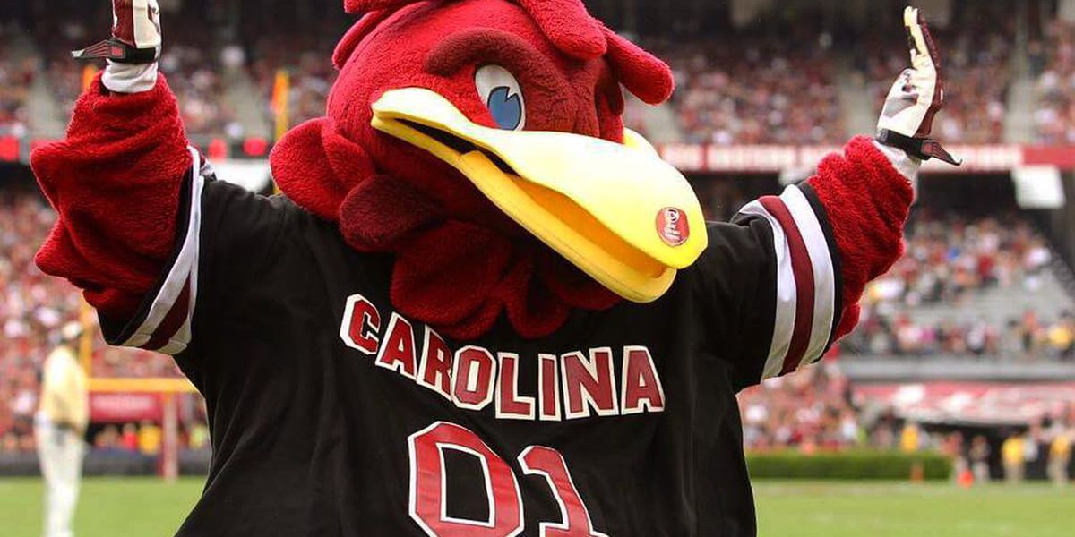 Cocky ranked in top 10 for greatest mascots in college ...